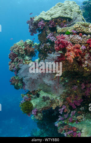 Diverse coral reef including soft corals and Sea fans (Alcyonacea), Fiji, South Pacific. - Stock Photo