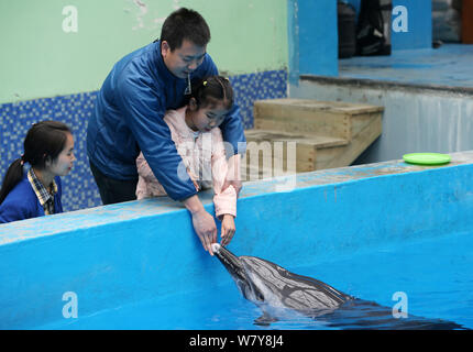Chinese autistic girl Chenchen interacts with a dolphin under the help of her parents at Chengdu Haichang Polar Ocean Park in Chengdu city, southwest - Stock Photo