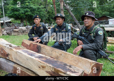Thap Lan anti-poaching rangers with Siam rosewood tree (Dalbergia cochinchinensis) timber  confiscated from poachers, Thap Lan National Park, Dong Phayayen-Khao Yai Forest Complex, eastern Thailand, August, 2014. - Stock Photo