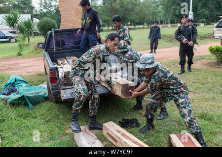 Thap Lan rangers unloading Siam rosewood tree (Dalbergia cochinchinensis) timber confiscated from poachers, Thap Lan National Park, Dong Phayayen-Khao Yai Forest Complex, eastern Thailand, August, 2014. - Stock Photo