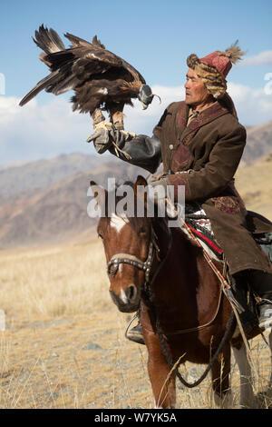Eagle hunter mounted on Mongolian horse with female Golden eagle (Aquila chrysaetos) near Sagsai, Bayan-Ulgii Aymag, Mongolia. September 2014.. - Stock Photo
