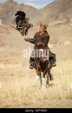 Eagle hunter mounted on Mongolian horse with his  with his female Golden eagle (Aquila chrysaetos) near Sagsai, Bayan-Ulgii Aymag, Mongolia. September 2014.. - Stock Photo
