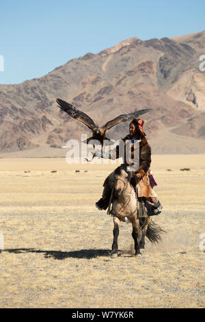 Eagle hunter mounted on Mongolian horse arrives with his female Golden eagle (Aquila chrysaetos) to compete at the Eagle Hunters Festival, near Sagsai, Bayan-Ulgii Aymag, Mongolia. September 2014.. - Stock Photo