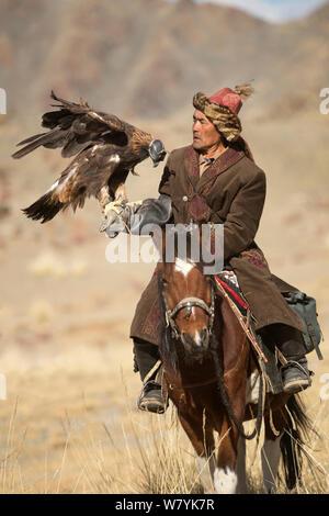 Eagle hunter mounted on Mongolian horse with female Golden eagle (Aquila chrysaetos), near Sagsai, Bayan-Ulgii Aymag, Mongolia. September 2014.. - Stock Photo