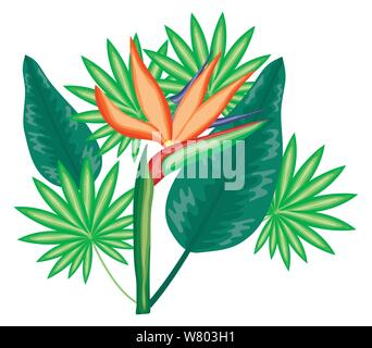 tropical heliconia flower and leafs plants vector illustration design - Stock Photo