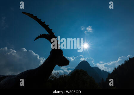 Statue of Alpine ibex (Capra ibex) silhouetted, with mountains, Kranjska Gora, Jesenice, Julian Alps,  Slovenia, October. - Stock Photo