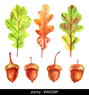 Watercolor autumn set with leaves and acorns. Four seeds of a tree of an oak red-brown color with a gold-ocher cup. 3 fallen leaves in green and orang - Stock Photo