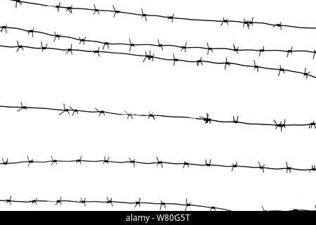 Isolated barbed wire on country border. Barbwire on fence for prohibition of illegal aliens crossing. - Stock Photo