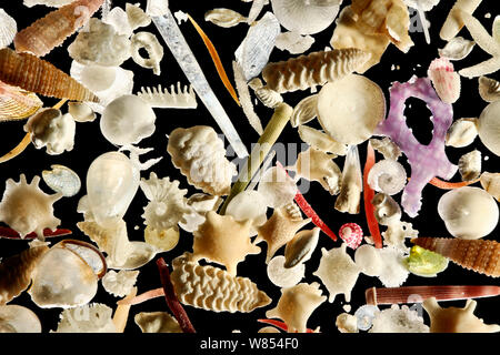 The white carbonate sand from Raja Ampat, Indonesia, is generated by a vast diversity of organisms: e.g. foraminifera, sponges, brachiopods, echinoderms, bryozoa and mollusks. Diagonal of frame approx. 8 mm  Digital focus stacking image - Stock Photo