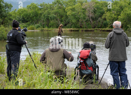Photographers viewing Kamchatka Brown Bear (Ursus arctos beringianus) standing in water fishing. South Kamchatka Sanctuary, Russian Far East, July. - Stock Photo