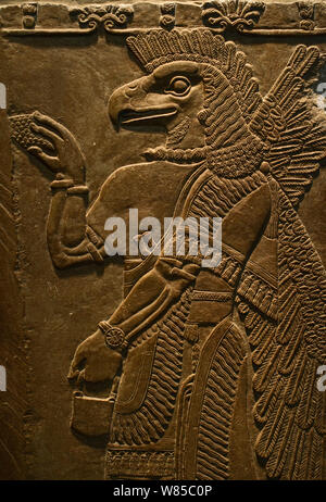 Sculptured wall relief depicting an Eagle headed protective Spirit from Temple of Ninurta, Nimrud the Assyrian capital in Northern Iraq, dating from 865 -860 BC. - Stock Photo