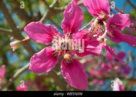 Silk floos flowers - Stock Photo