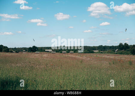 Gold Wheat flied panorama with tree at sunset, rural countryside clouds and blue sky - Stock Photo