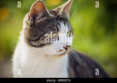 Spotted mottled cat with bright red-green eyes is illuminated by the sun on a bright summer day and sits on a background of flowers and grass. - Stock Photo