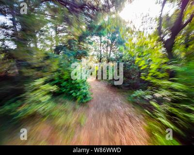 Green forest countryside path pathway natural environment speeding through dense trees - Stock Photo