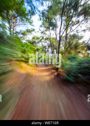 Green forest countryside path pathway speeding through dense trees natural environment - Stock Photo