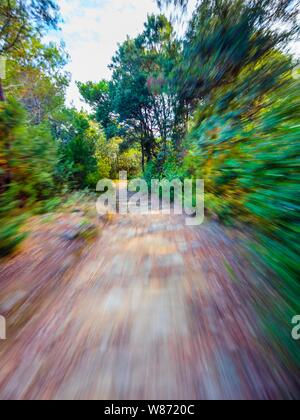 Green forest countryside path pathway speeding through dense trees - Stock Photo