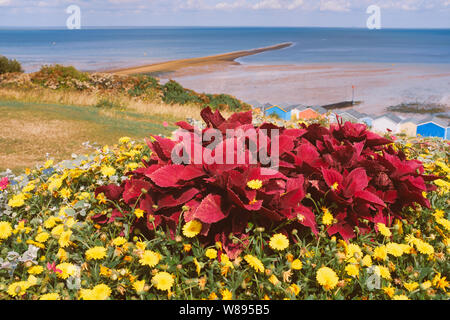 A display of a brightly coloured plant and wild flowers on the grass slopes behind beach huts and a spit of land which is know the locally a 'Whitstab - Stock Photo