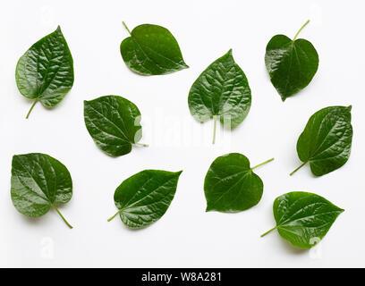 Piper sarmentosum or Wildbetal leafbush on white background - Stock Photo