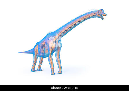 Brachiosaurus dinosaur skeletal structure, illustration. Brachiosaurs lived 154-153 million years ago during the late Jurassic period. - Stock Photo