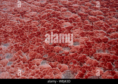 Photosynthesizing pigments of the microorganism cyanobacteria turns Lake Natron into amazing red color (aerial view) - Stock Photo