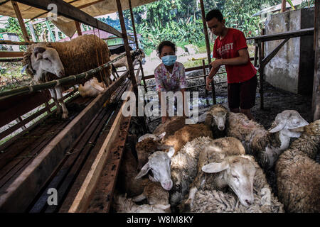 Medan, North Sumatra, Indonesia. 10th Aug, 2019. A goats held is to be delivered to a customer at a cattle market for the upcoming Eid al-Adha festival in Medan, Indonesia on 10 August, 2019. Muslim people in the world will celebrate Eid al-Adha, or the Feast of the Sacrifice, which marks the end of the Hajj pilgrimage as commemoration of Prophet Abraham's readiness to Mecca by slaughtering sheep, goats and cows whose meat will later be distributed to the poor as to show obedience to God. Credit: Albert Ivan Damanik/ZUMA Wire/Alamy Live News - Stock Photo