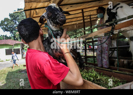 Medan, North Sumatra, Indonesia. 10th Aug, 2019. A man held is goats to be delivered to a customer at a cattle market for the upcoming Eid al-Adha festival in Medan, Indonesia on 10 August, 2019. Muslim people in the world will celebrate Eid al-Adha, or the Feast of the Sacrifice, which marks the end of the Hajj pilgrimage as commemoration of Prophet Abraham's readiness to Mecca by slaughtering sheep, goats and cows whose meat will later be distributed to the poor as to show obedience to God. Credit: Albert Ivan Damanik/ZUMA Wire/Alamy Live News - Stock Photo