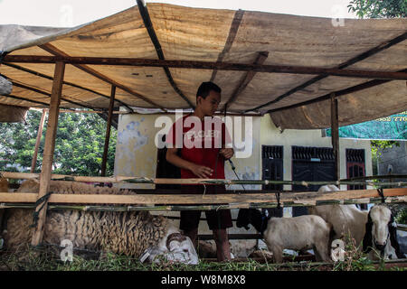 Medan, North Sumatra, Indonesia. 10th Aug, 2019. A goat is held to be delivered to a customer at a cattle market for the upcoming Eid al-Adha festival in Medan, Indonesia on 10 August, 2019. Muslim people in the world will celebrate Eid al-Adha, or the Feast of the Sacrifice, which marks the end of the Hajj pilgrimage as commemoration of Prophet Abraham's readiness to Mecca by slaughtering sheep, goats and cows whose meat will later be distributed to the poor as to show obedience to God. Credit: Albert Ivan Damanik/ZUMA Wire/Alamy Live News - Stock Photo