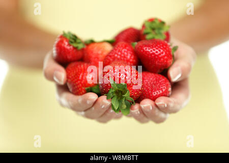 Closeup of women cupped hands holding many fresh strawberries. Female adult showing a handful of red berries strawberries in studio. Healthy food fruits diet. - Stock Photo