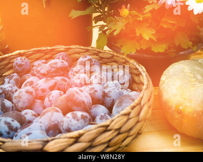 Fresh organic plums in a wicker basket, harvest. - Stock Photo