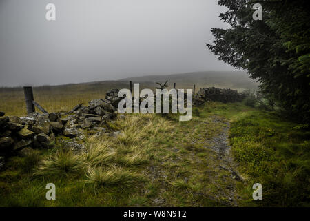 Narrow Hiking Trail Through Misty Conifer Forest and Heather Flowers in Scotland - Stock Photo