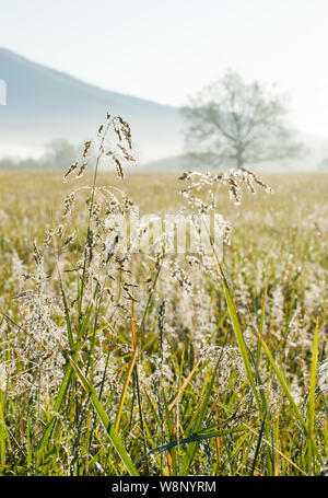 Early Morning dew drops glisten on the grasses against the backdrop of meadows and mountains of the Great Smoky Mountain National Park in Townsend, TN - Stock Photo