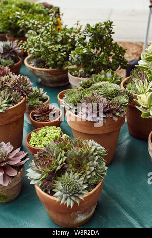 Group of succulents and cactus plants on display for sell at a Farmer's Market in Boulder, Colorado - Stock Photo