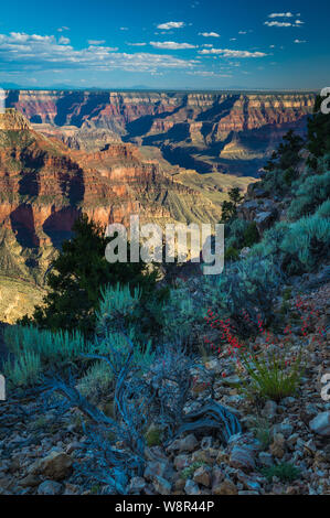 Point Sublime on the North Rim of the Grand Canyon National Park in Arizona, United States - Stock Photo