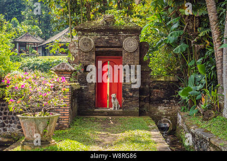 The dog sits on the background of a large red front door - Stock Photo