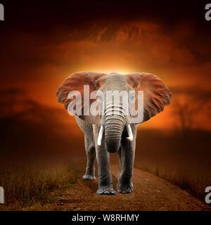 Close elephant on savanna landscape background and Mount Kilimanjaro at sunset - Stock Photo