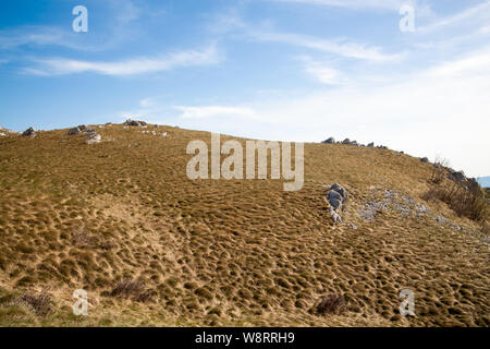 The slope covered with dry grass and some stones on the mountain Nanos - Stock Photo
