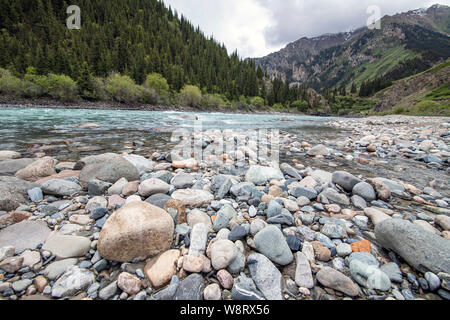 mountain river with turquoise water with a bank of gray pebble sand and stones of various sizes flowing into a gorge with green coniferous forest. - Stock Photo