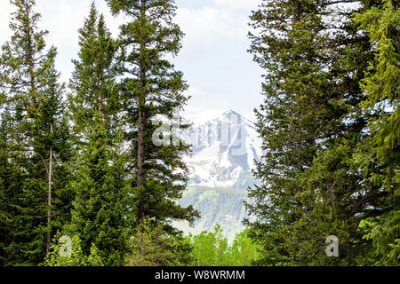 Mount Crested Butte, Colorado in summer with mountain framing of pine trees on Snodgrass trail - Stock Photo