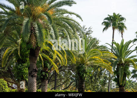 Florida palm trees line the entrance to the Gardens Mall in Palm Beach Gardens, Florida. (USA) - Stock Photo