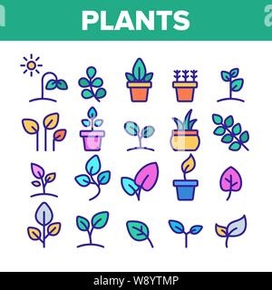 Color Different Plants Sign Icons Set Vector - Stock Photo