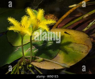 A beautiful closeup shot of tropical flowers growing near a swamp in a forest - Stock Photo