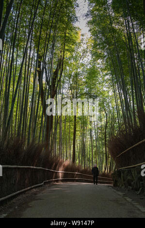 Male person walks along a footpath in early morning sunlight, Sagano Bamboo Forest, Japan. - Stock Photo