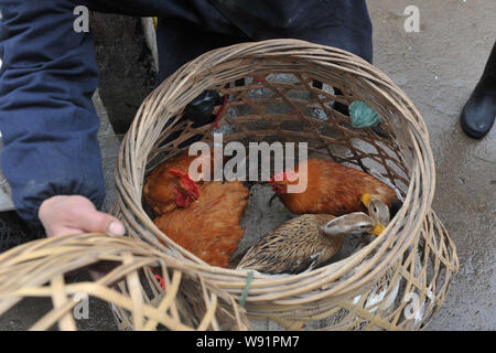 --FILE--A Chinese poultry vendor sells chickens and ducks at a market in Linan, east Chinas Zhejiang province, 5 April 2013.   One new human H7N9 avia - Stock Photo