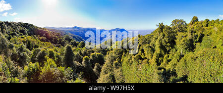 Lush evergreen tree tops and canopy in Dorrigo National park of ancient Gondwana continent rainforest lit by bright sun under blue sky in Australia. - Stock Photo