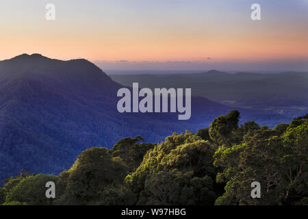Ancient Gondwana continent rainfores around Dorrigo plateau in Dorrigo National park of Australia at sunrise against pink sky from elevated lookout pl - Stock Photo