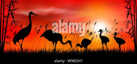 Birds cranes on sunset background. Evening, sky, sun. Birds on a background of grass, bamboo and reeds. Evening landscape. Wildlife scene. - Stock Photo