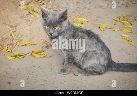 Little gray kitten in the autumn. Wild kitten outdoor lying on the cement floor - Stock Photo