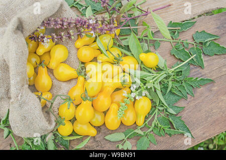 Small yellow tomatoes over wooden background. Closeup image  of yellow pear tomatoes - Stock Photo
