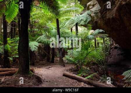The ferns and canyon walls at the Lithgow Glowworm tunnel in the Blue Mountains New South Wales Australia on 31st July 2019